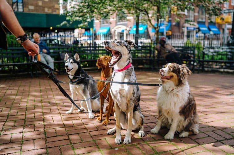 What Dog Is Right For Me Quiz